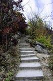 与石台阶的场面在秋天森林里 免版税库存图片