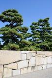与石墙的杉树 免版税库存图片