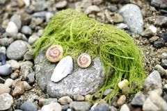 与石头、海藻和贝壳的滑稽的表面 免版税图库摄影