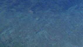 与石底部和小的蓝色透明海水起波纹的 股票视频