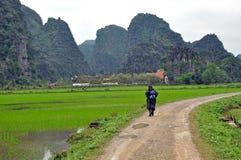 与石灰石塔和米领域的风景。越南 库存图片