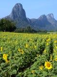 与石灰石山的向日葵领域-垂直 库存图片