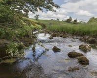 与石头和树的小小河,与分支在水中 免版税库存图片