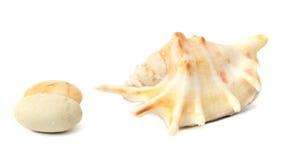 与石头的海壳 图库摄影