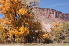 与砂岩小山的秋天三角叶杨 免版税库存照片