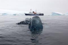 与研究小船在背景中,南极洲的黑冰块 库存照片