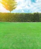 与砖墙和草坪领域的增长的树与爆炸光 库存图片