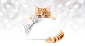 与礼品券的姜猫和银丝带鞠躬 库存照片