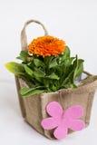 与礼品券的美丽的万寿菊花在帆布袋子包装了 免版税库存照片