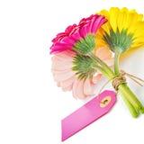 与礼物标记的五颜六色的大丁草花 免版税库存照片