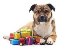与礼物的小狗 免版税库存图片
