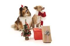 与礼物的狗 库存照片