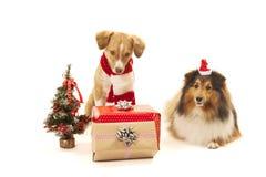 与礼物的狗 免版税库存照片