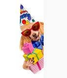 与礼物的生日狗。 免版税库存照片