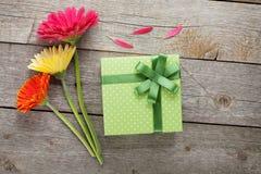 与礼物盒的三朵五颜六色的大丁草花 免版税库存图片