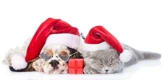 与礼物盒睡觉在r的猎犬小狗和微小的小猫 免版税库存照片