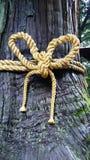 与神道的信徒的绳索的雪松 免版税图库摄影