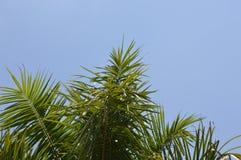 与秀丽蓝天的棕榈树 免版税库存照片