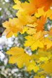 与秀丽bokeh的抽象秋季背景 免版税库存图片