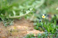 与秀丽bokeh,蝴蝶花的夏天自然本底 免版税库存图片