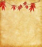 与秋叶分支的老纸。 库存图片
