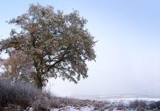 与秋叶和树冰在一个多雪的领域,胜利的橡树 免版税库存照片