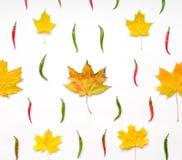 与秋叶和胡椒的明亮的样式在白色背景 平的位置,看法从上面 图库摄影