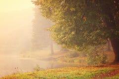 与秋叶的一棵大树在用大雾盖的湖的岸 免版税图库摄影