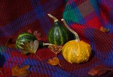 与秋叶的小装饰金瓜在红色格子花呢披肩 图库摄影