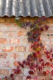 与秋叶的庭院狂放的葡萄在砖墙上 免版税库存图片