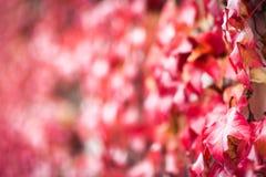 与秋叶的抽象秋天秋天背景 免版税库存图片