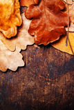 与秋叶的抽象背景在凹道木老backg 免版税库存照片