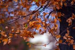 与秋叶的树枝 图库摄影