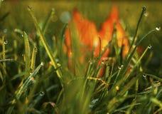 与秋叶的满地露水的草 库存图片