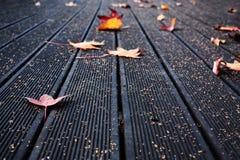 与秋叶的甲板地板 免版税库存图片