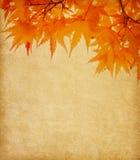 与秋叶的老纸 免版税库存照片