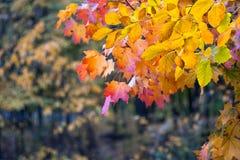 与秋叶的背景 免版税库存图片