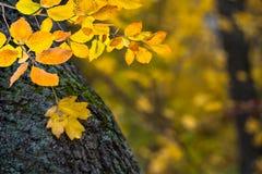 与秋叶的背景 图库摄影