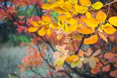 与秋叶的背景 免版税图库摄影