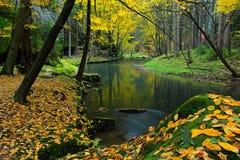与秋叶的落叶松属石头在与河和树,森林在背景中, Kamenice河的绿色风景,捷克nationa的 图库摄影