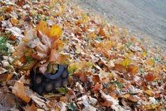 与秋叶的袋子 库存照片
