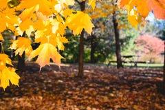 与秋叶的风景 减速火箭的样式过滤器,槭树叶子 免版税库存图片