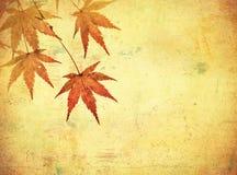与秋叶的Grunge背景 库存照片