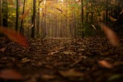 与秋叶落的金黄秋天足迹 库存图片