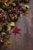 与秋叶,蛇麻草,槭树的静物画离开 库存图片