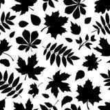 与秋叶黑剪影的无缝的样式在白色的 库存图片