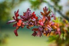 与秋天五颜六色的叶子的背景 免版税库存图片