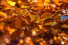 与秋天五颜六色的叶子的背景 免版税图库摄影