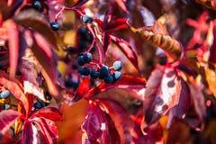 与秋天五颜六色的叶子的背景 库存图片