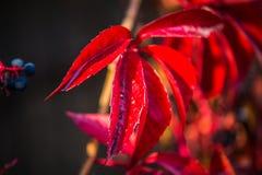 与秋天五颜六色的叶子的背景 库存照片